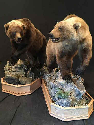 Pennsylvania Taxidermy Studio - Pennsylvania Taxidermist Brown Bear Taxidermy