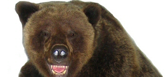 Brown Bear Taxidermy Studio