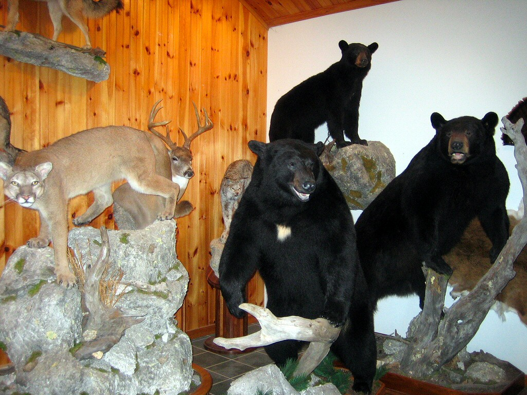 Brown Bear Taxidermy Studio 289 Pleasant Valley Road - Pine Grove, Pa. 17963