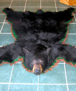 Bear Skin Rugs Mounts - Professionally Created With Attention To Detail.