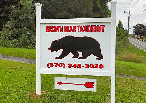 Brown Bear Taxidermy Studio 289 Pleasant Valley Road (Rte 443) Pine