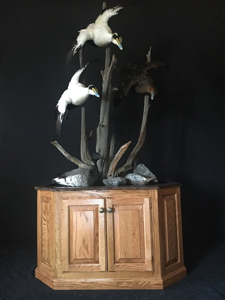 Bird Taxidermy, Waterfowl Taxidermy,Duck Taxidermist PA