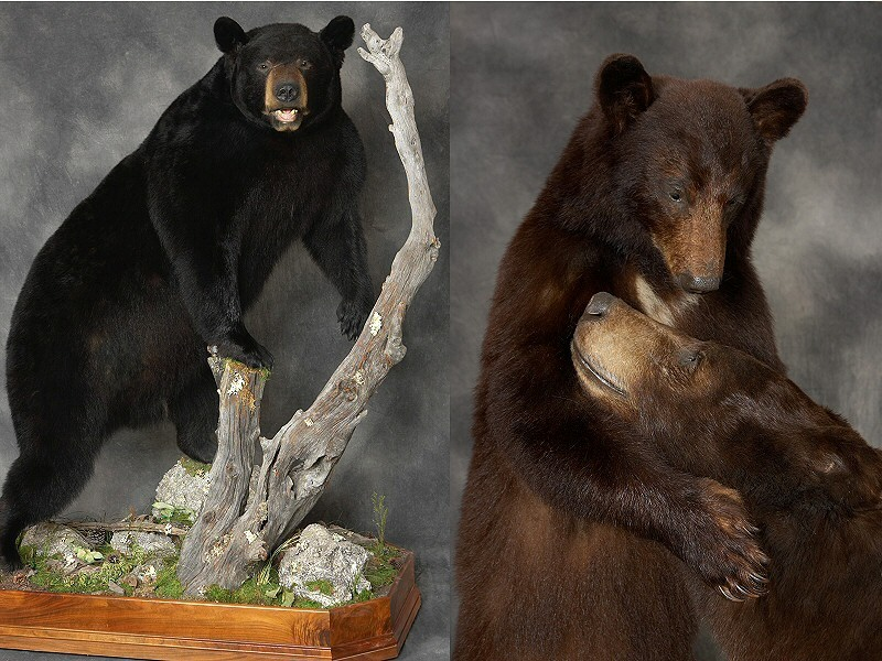 Brown Bear Taxidermy Studio 289 Pleasant Valley Road (Rte