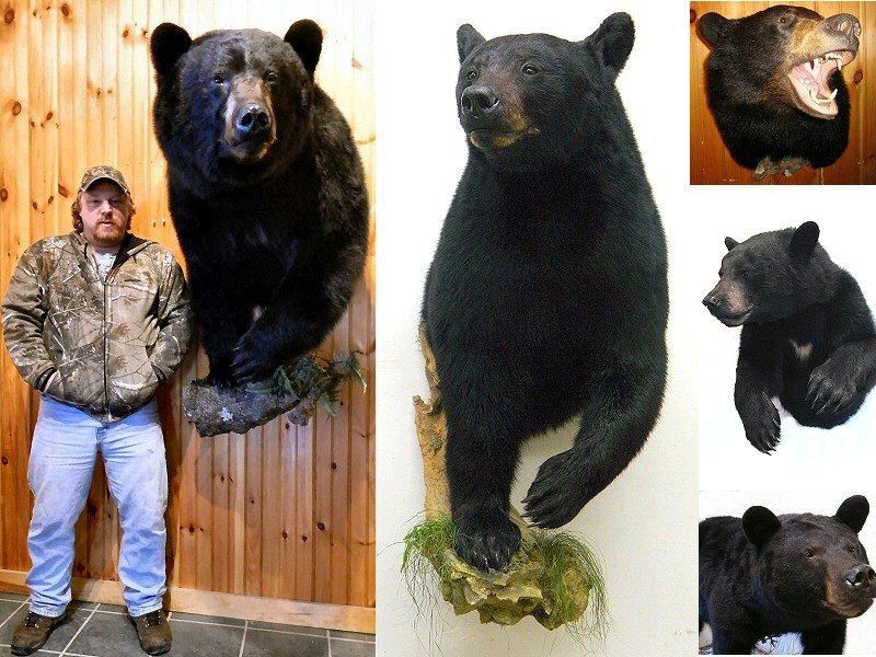 Brown Bear Taxidermy Studio 289 Pleasant Valley Road Rte