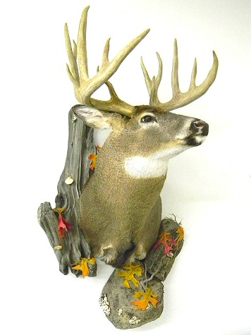 taxidermy studio deer taxidermy deer taxidermist pennsylvania pennsylvania