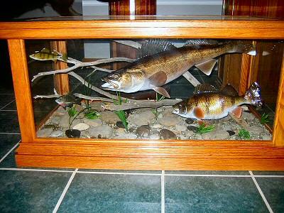 Pennsylvania Fish Taxidermy, Pennsylvania Fish Taxidermist, Fish  Taxidermist, Fish Taxidermy,Coffee
