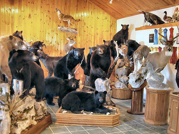 How To Display A Bear Skin Rug Road Trip Report Twisp Of